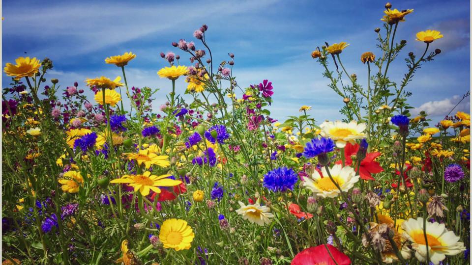 Wilde bloemen bij Marianum